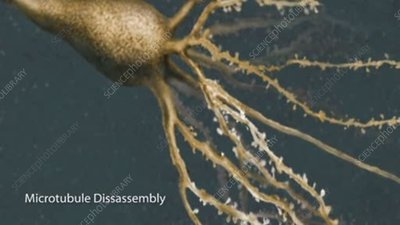 Microtubule Disassembly