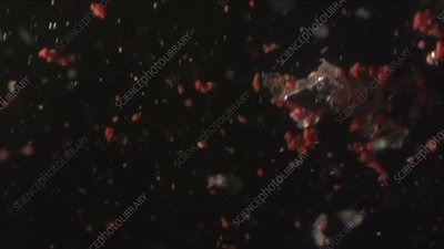 Microplastic particles floating in water