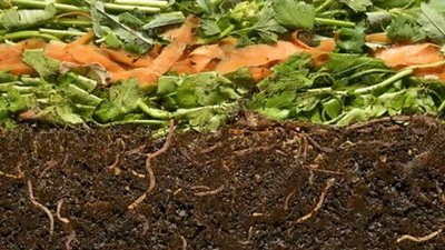 Vermicompost breakdown, time-lapse footage