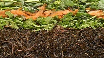 Worms composting vegetable scraps, timelapse
