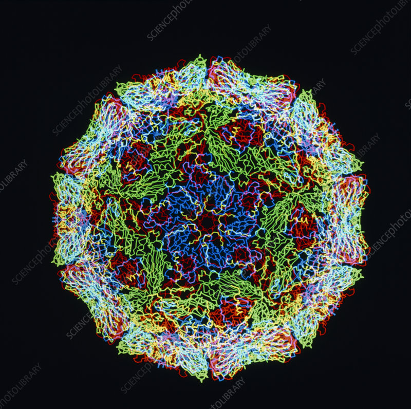 Computer graphics of Foot & Mouth virus
