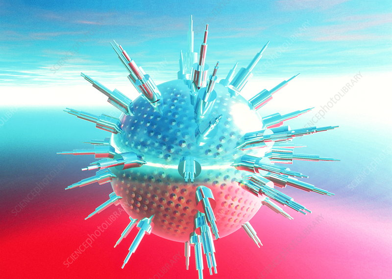 common cold virus. the common cold and