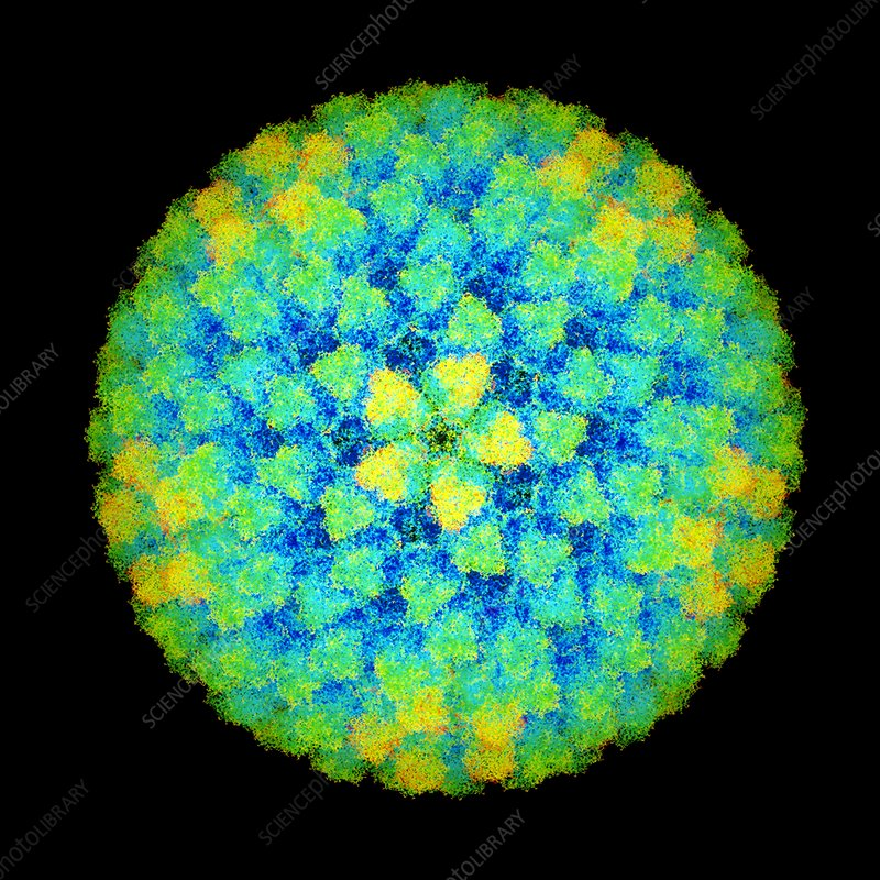 Bluetongue virus particle