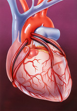 Heart bypass grafts