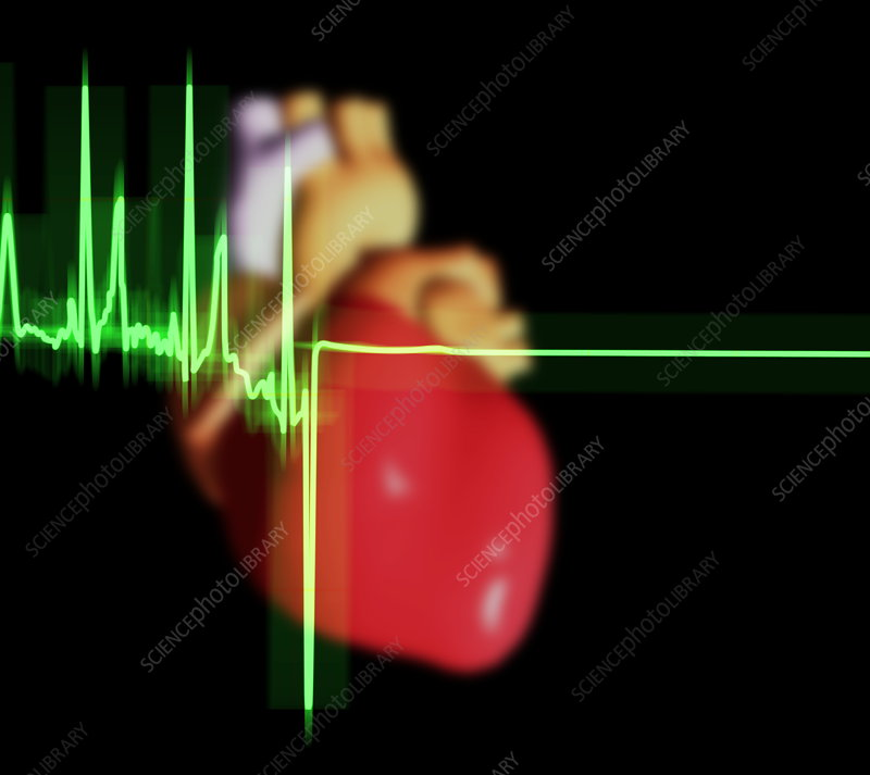ECG trace and heart