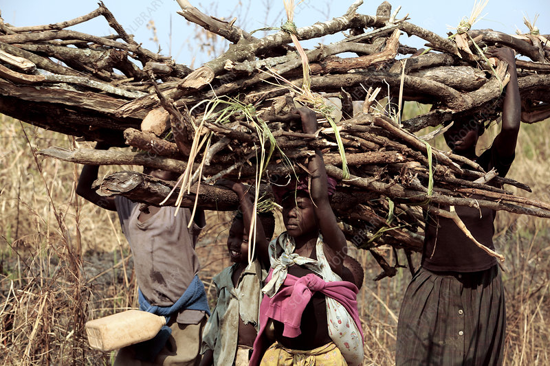 Carrying wood to a refugee camp, Uganda