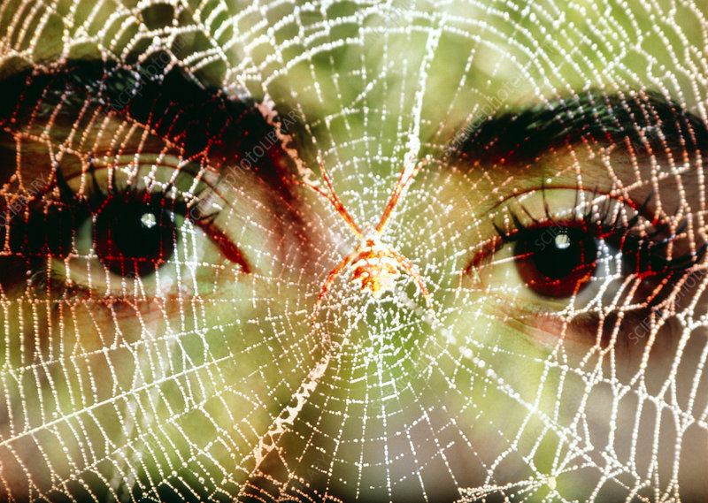 Arachnophobia: woman's face peering at spider web