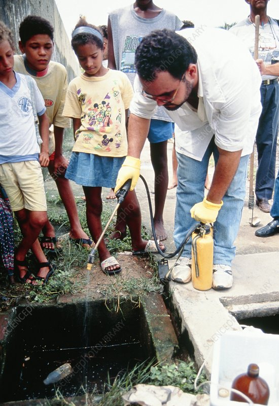 Health Worker Sprays Drain To Control Mosquitoes Stock