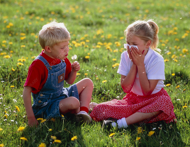 Young girl in meadow sneezing