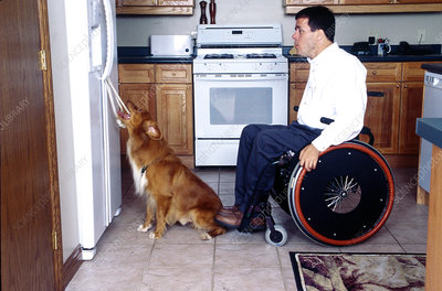 Disabled mans dog opens fridge door for him