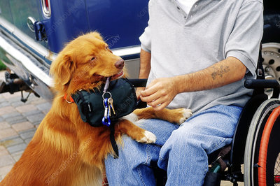 Service dog offers retrieved dropped keys