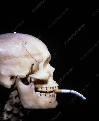 Human skull with cigarette in its mouth