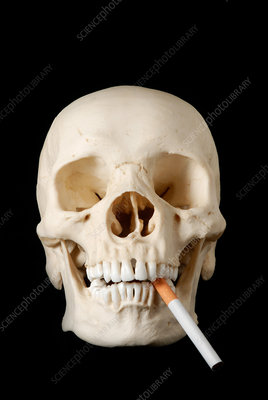 Human skull with cigarette in mouth