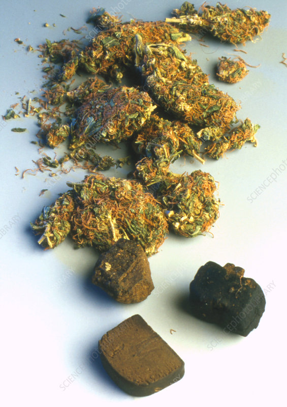 Resin hashish and leaves of Cannabis