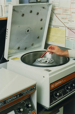 Blood samples being placed in a centrifuge.
