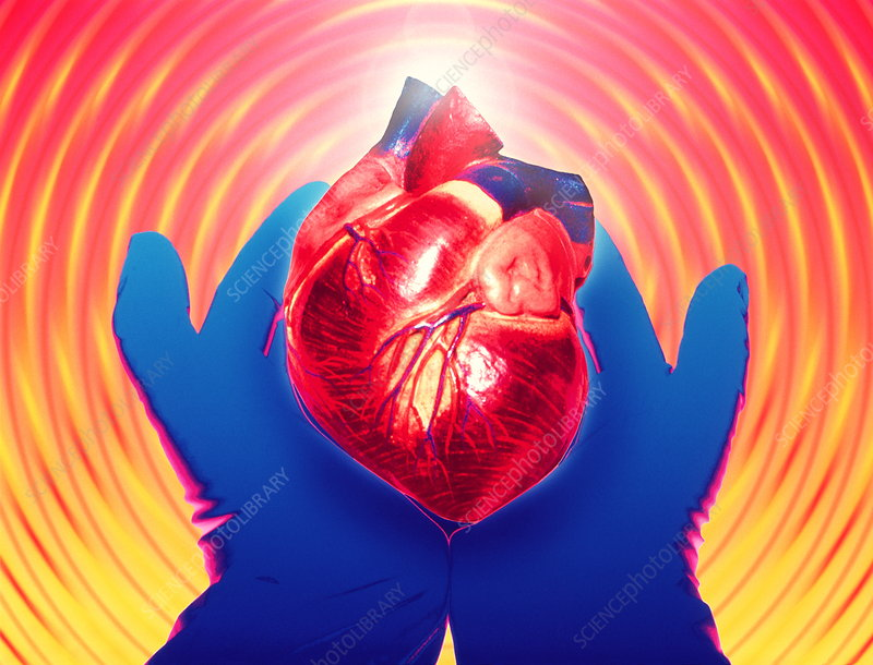 Heart donation abstract: gloved hands hold heart