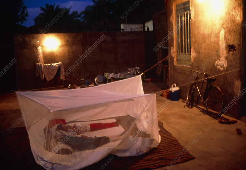 View of people sleeping under a mosquito net
