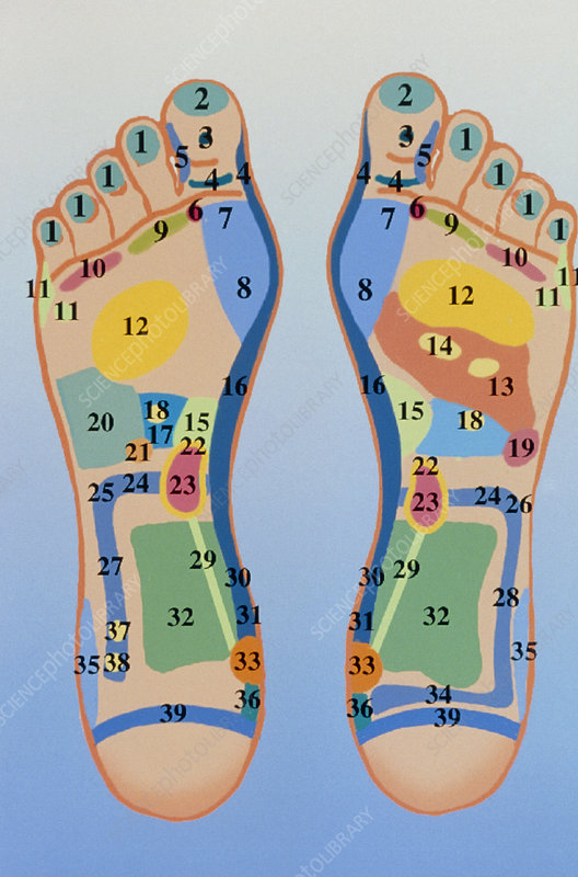 Reflexology chart showing pressure points on feet