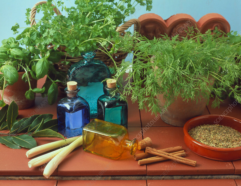 Bottles of aromatherapy oil and herbal ingredients