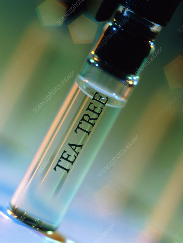 Bottle of essential oil from tea tree