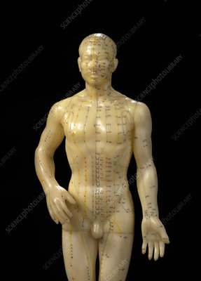 Male dummy showing acupuncture meridians & points