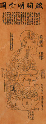 Chinese acupuncture chart showing internal organs