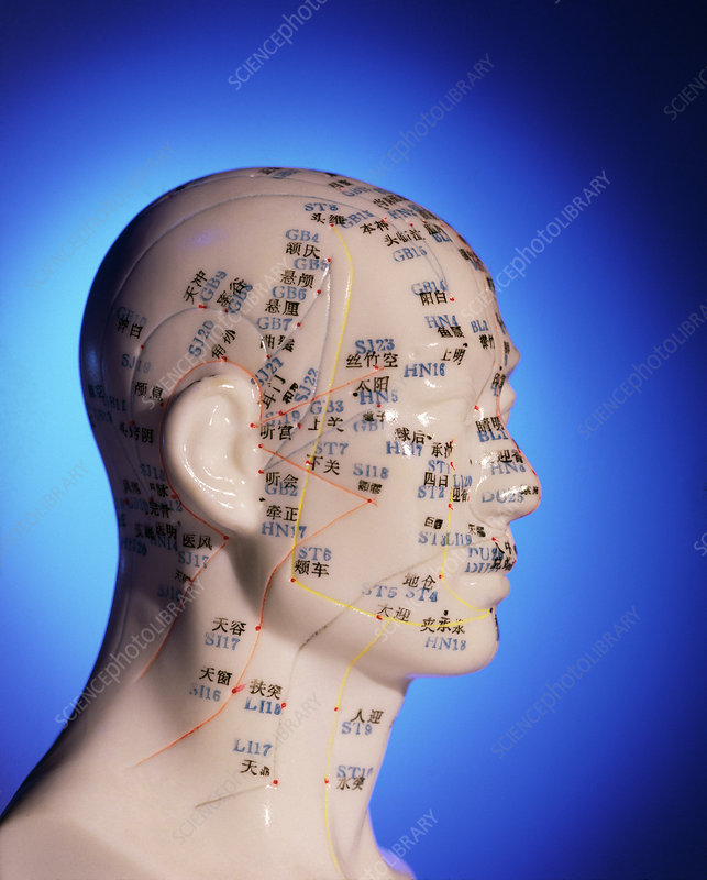 Acupuncture chart on a cast of a head and neck