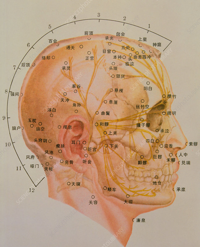 Chinese acupuncture chart - Stock Image - M746/0047 ...