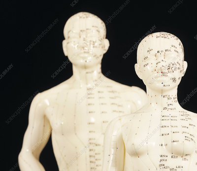 Acupuncture models