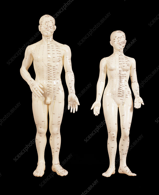 Acupuncture models
