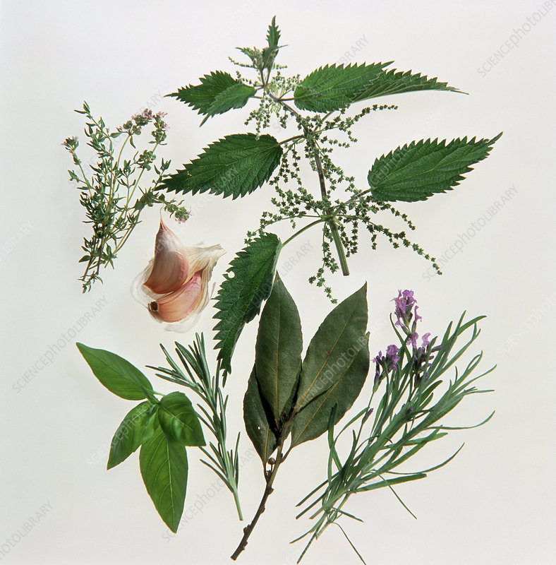 Still life of various medicinal plants