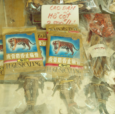 Chinese pharmacy displaying tiger bone & seahorses