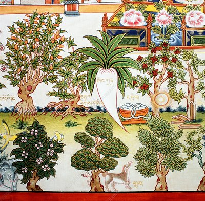 Detail from a Tibetan herbal medicine chart