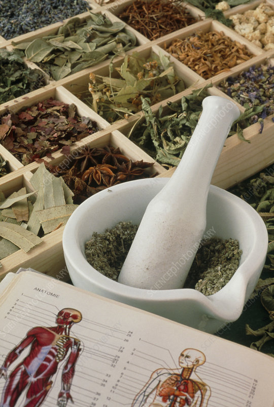 Pestle and mortar with herbs and an anatomy book