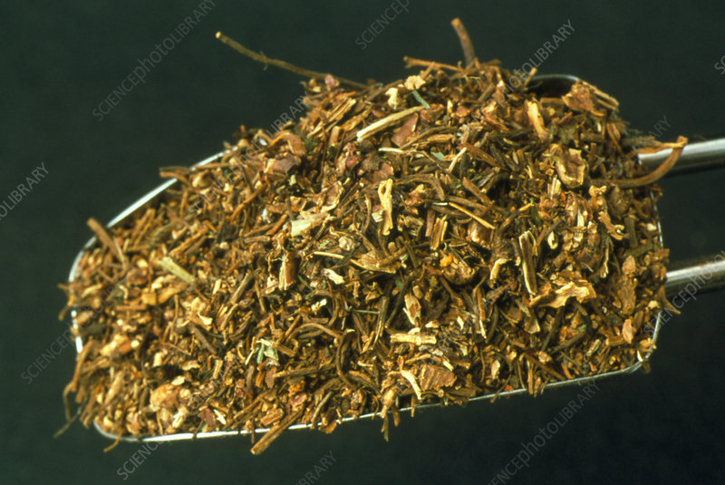 Dried avens herb