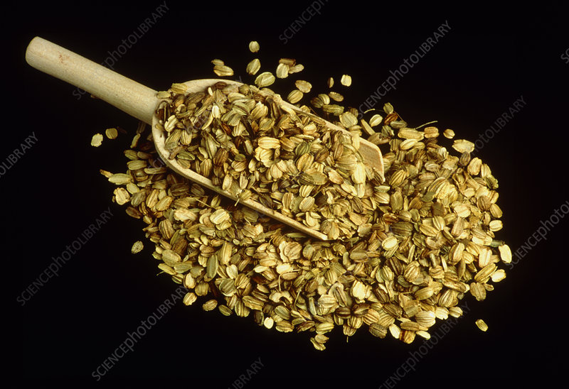 Don quai seeds