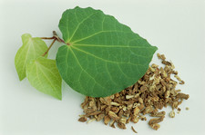 Kava kava leaf and root