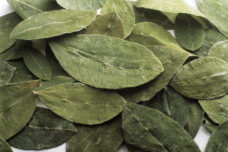 Dried coca leaves