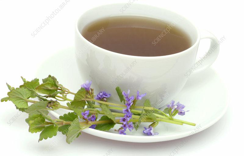 Ground ivy tea