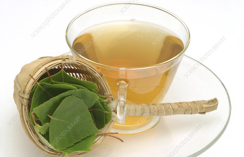 Silver birch tea