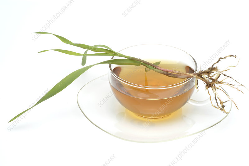 Couch grass tea