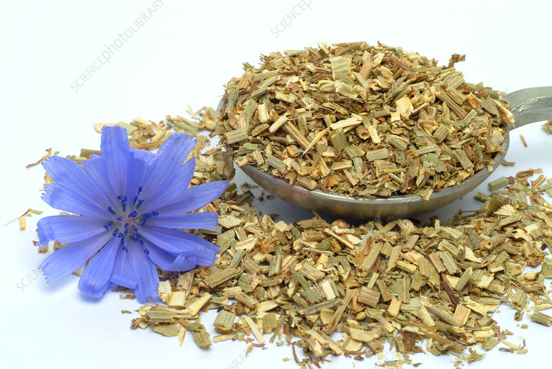 Dried chicory leaves and flower