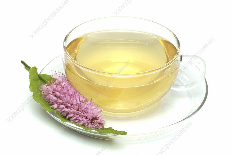 Bistort tea