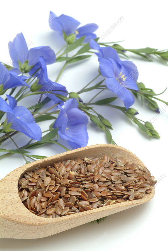 Flax seeds and flowers