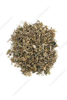 Hydrocotle herb
