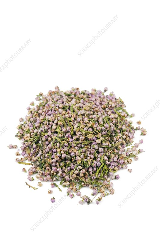 Heather flowers
