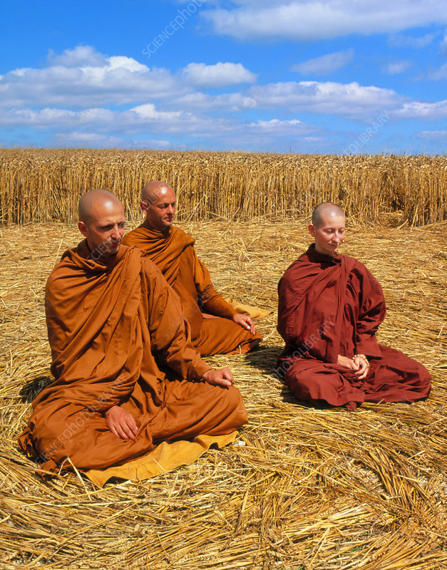 Buddhist monks meditating in a crop circle