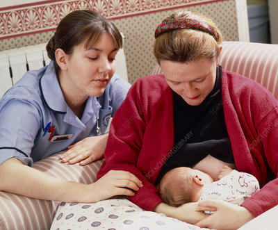 Midwife helps mother to establish breastfeeding