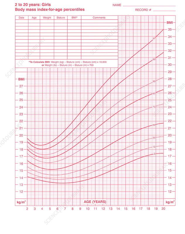 body mass index chart - stock image - m825  0846