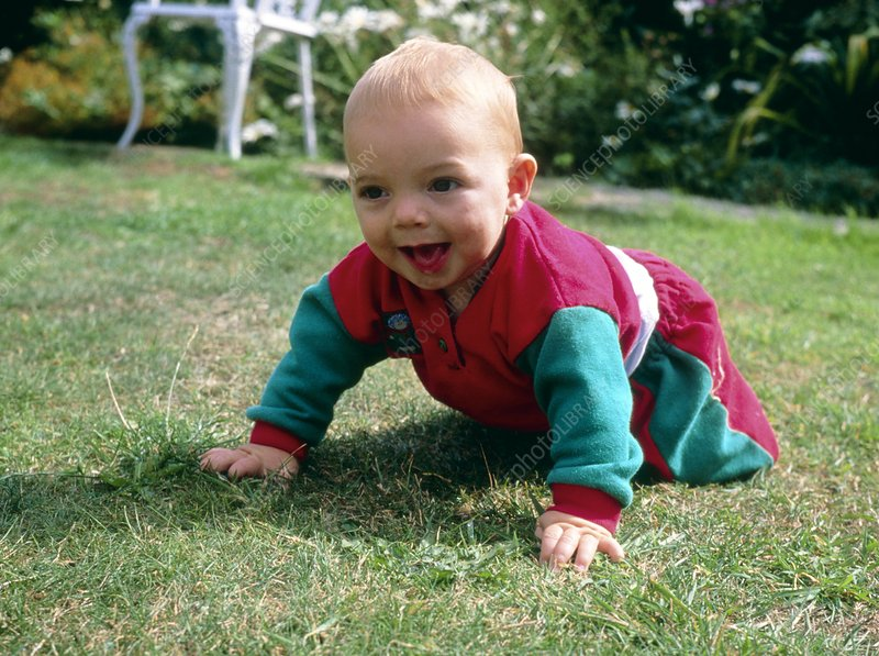 Infant child crawls on hands and knees on a lawn